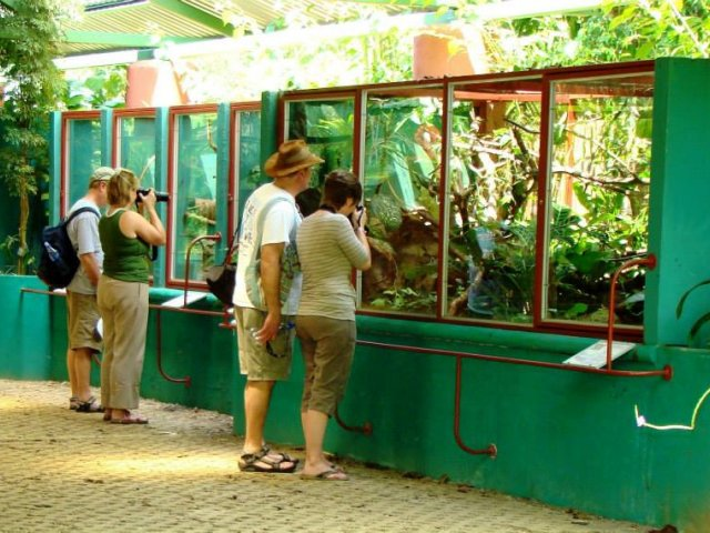 Uvita Information Center Reptilandia